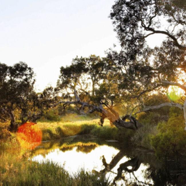 Atherstone Estate featuring a lake and native gum trees